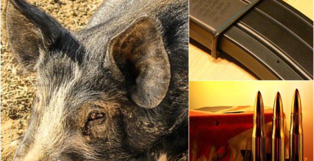 Hog Hunting Gear Products