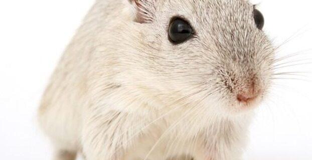 Pest Control Thermal Imaging